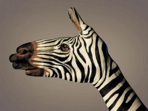 Ręka? Czy zebra?