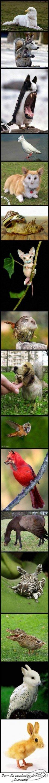 Zwierzęta z Czernobyla