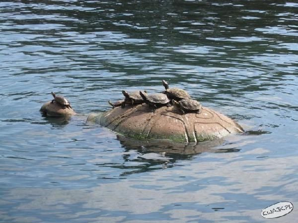 Żółwiki z mamusią
