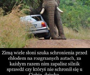 Schronienie słoni