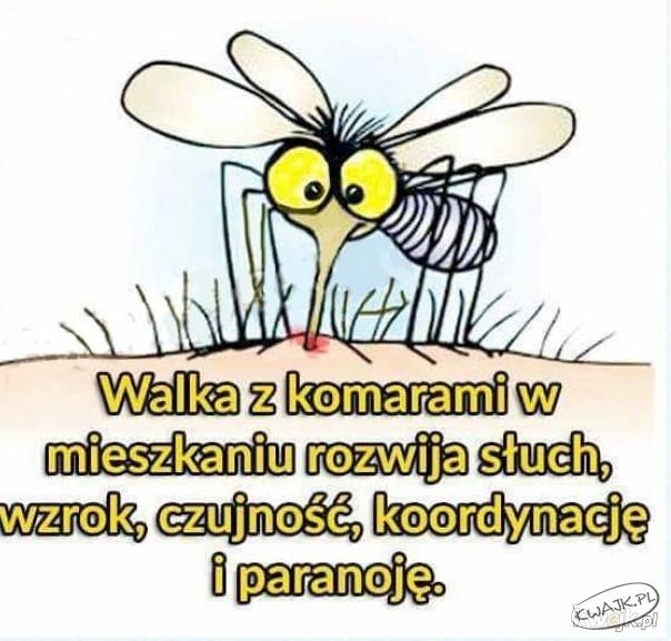 Walka z komarami w mieszkaniu rozwija słuch, wzrok, czujność i...