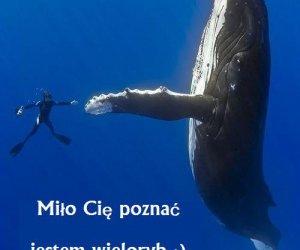 Poznaj wieloryba