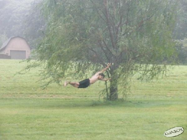 Ćwiczenia z drzewem tle