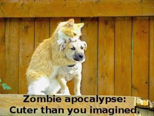 Zombie kot
