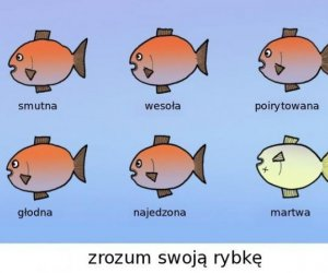Zrozumieć rybkę