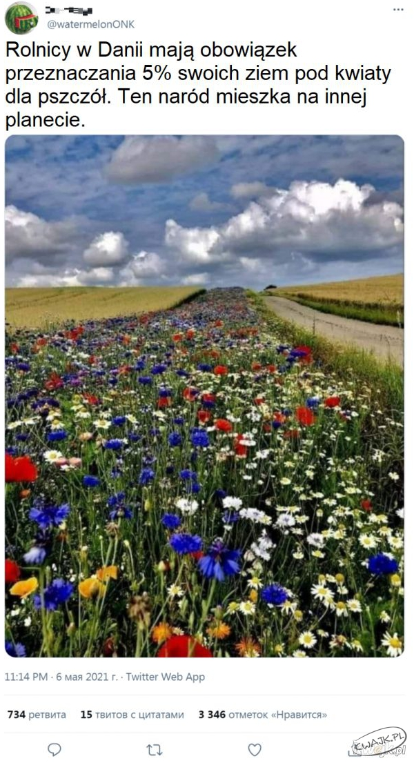 Rolnicy w Darnii mają obowiązek przeznaczenia 5% swoich ziem pod kwiaty