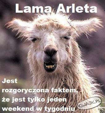Zgadzamy się z Lamą Arletą