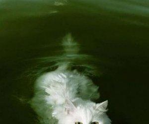 Aportujący kot