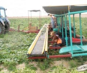 Być żonami rolników