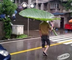 Największy liść na świecie