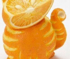 Pomarańczowy kot
