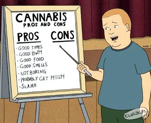 Plusy i minusy Cannabis