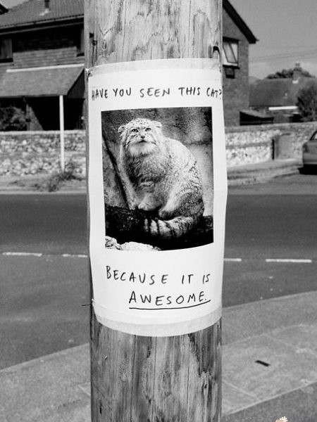 Widziałeś tego kota?