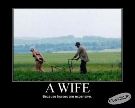 Żona - bo konie są drogie