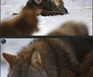 Jedzący z wilkami
