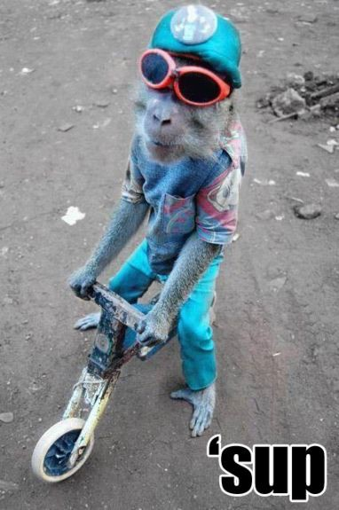 Małpi rower