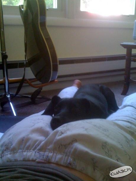Najlepsze miejsce do snu dla mojego psa