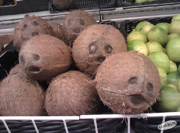 Kokosowe dziubki