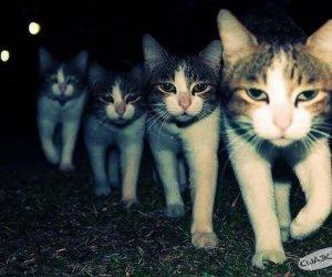 Małe kotki cztery