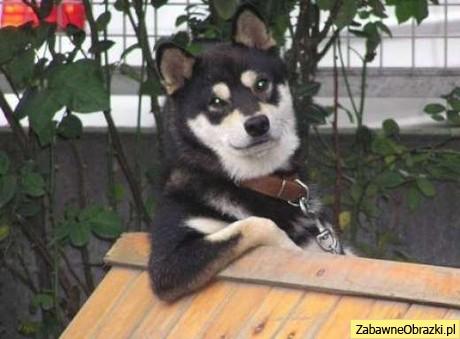 Psy też się lansują