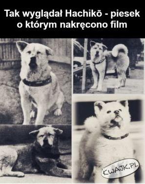 Pies o smutnych oczach pełnych nadziei