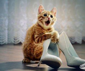 Jak to ja nie idę? Kupiłam nowe buty!