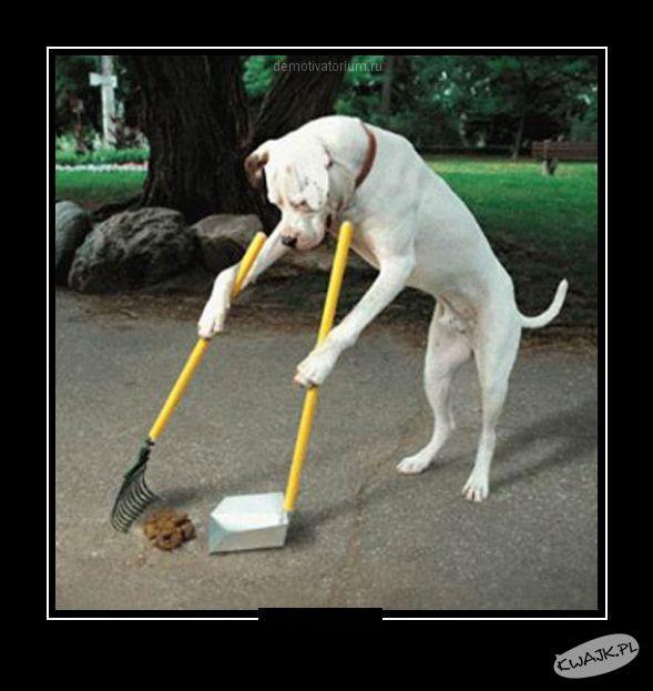 Dobrze wychowany pies