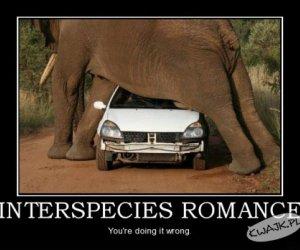 Międzygatunkowy romans