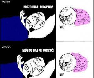 Mózg troll