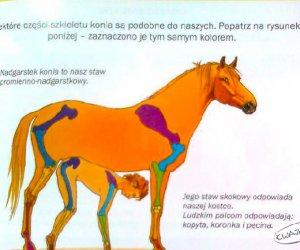 Książka do biologii...