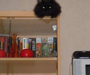 Pamiętaj, kot Leon patrzy!