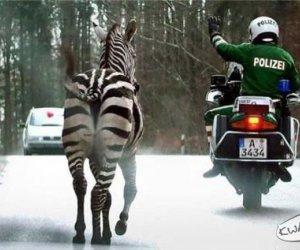 Stój! Policja!