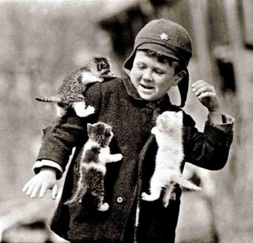 Atak kotów
